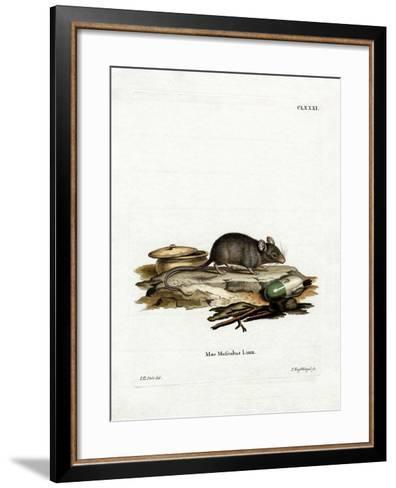House Mouse--Framed Art Print