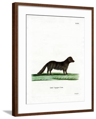Arctic Fox--Framed Art Print