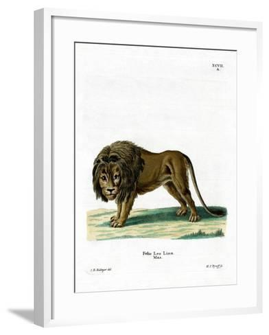 Lion--Framed Art Print