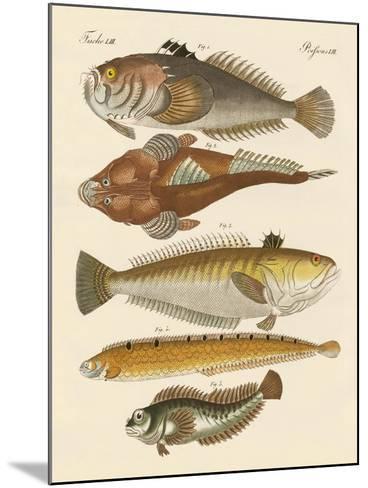 Strange Fish--Mounted Giclee Print
