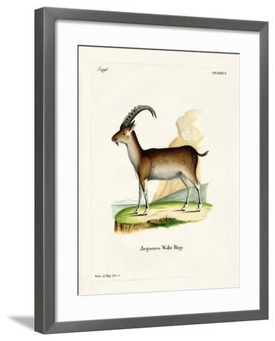 Walia Ibex--Framed Art Print