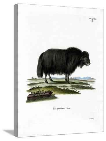 Yak--Stretched Canvas Print