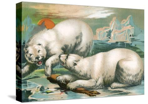Two Polar Bears Fighting over Seal, 1884--Stretched Canvas Print