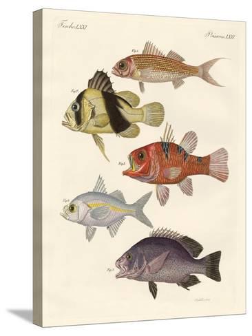 Strange Fish--Stretched Canvas Print