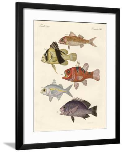 Strange Fish--Framed Art Print