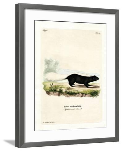 Texan Skunk--Framed Art Print
