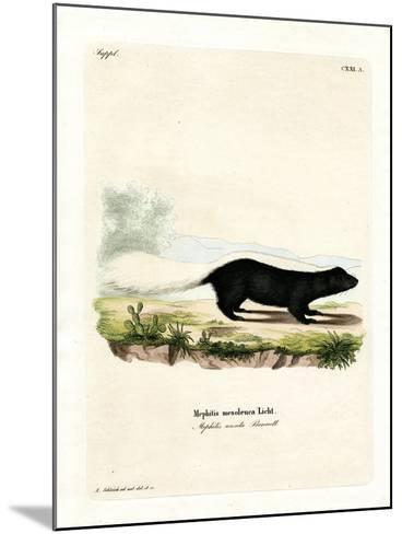 Texan Skunk--Mounted Giclee Print