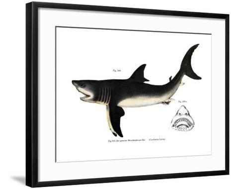 White Shark--Framed Art Print