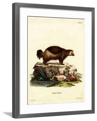 Wolverine--Framed Art Print