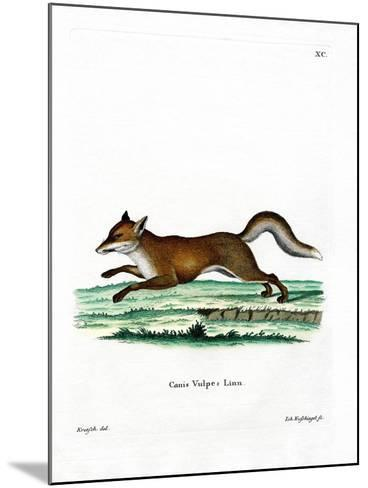 Red Fox--Mounted Giclee Print