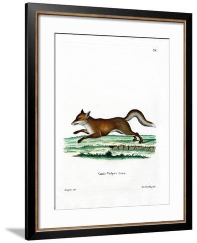 Red Fox--Framed Art Print