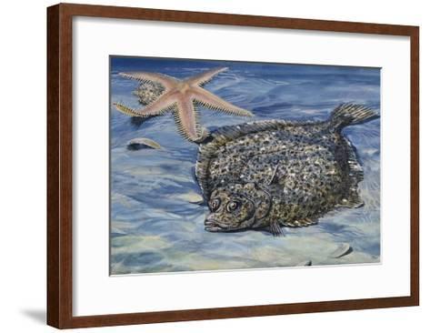Turbot (Scophthalmus Maximus or Psetta Maxima), Scophthalmidae--Framed Art Print