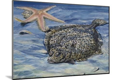 Turbot (Scophthalmus Maximus or Psetta Maxima), Scophthalmidae--Mounted Giclee Print
