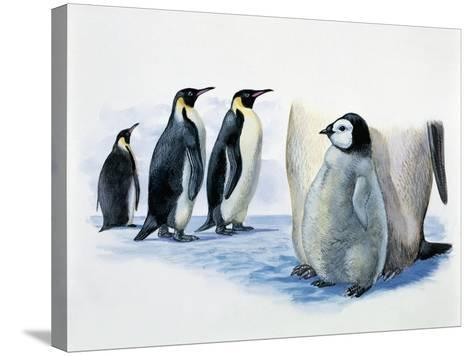 Close-Up of an Emperor Penguin with its Chick (Aptenodytes Forsteri)--Stretched Canvas Print