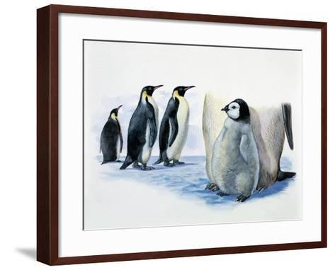 Close-Up of an Emperor Penguin with its Chick (Aptenodytes Forsteri)--Framed Art Print