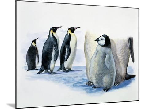 Close-Up of an Emperor Penguin with its Chick (Aptenodytes Forsteri)--Mounted Giclee Print