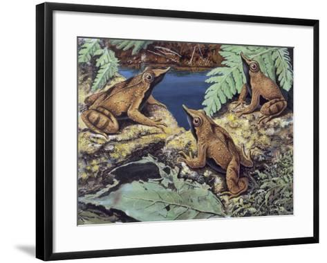 Close-Up of Three Darwin's Frogs in the Forest (Rhinoderma Darwinii)--Framed Art Print