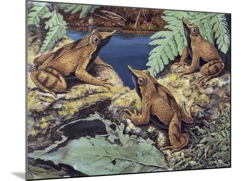 Close-Up of Three Darwin's Frogs in the Forest (Rhinoderma Darwinii)--Mounted Giclee Print