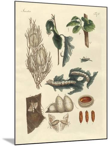 The Silkworm--Mounted Giclee Print