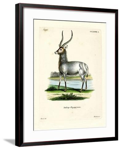 Waterbuck--Framed Art Print