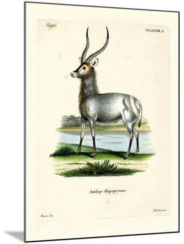 Waterbuck--Mounted Giclee Print
