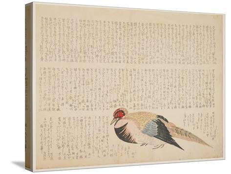 Pheasant, C.1818-29--Stretched Canvas Print
