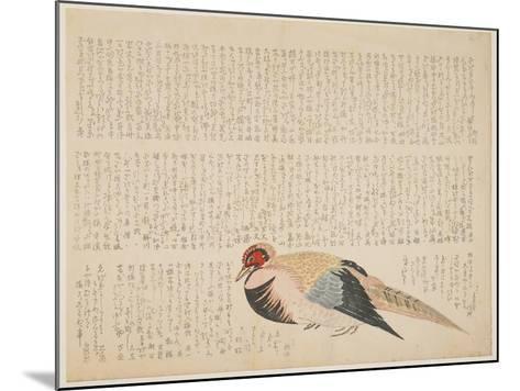 Pheasant, C.1818-29--Mounted Giclee Print