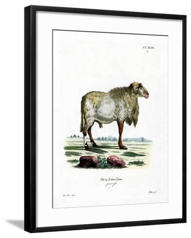 Guinea Sheep--Framed Art Print