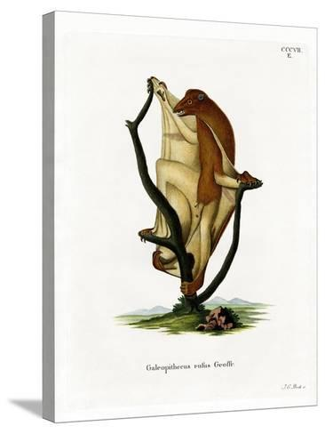 Flying Lemur--Stretched Canvas Print