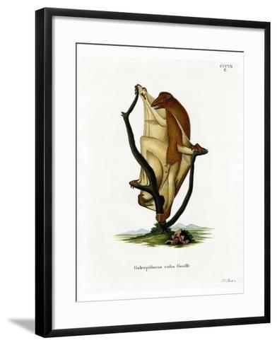 Flying Lemur--Framed Art Print