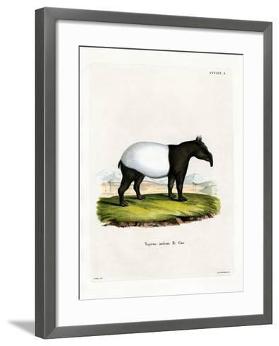 Indian Tapir--Framed Art Print