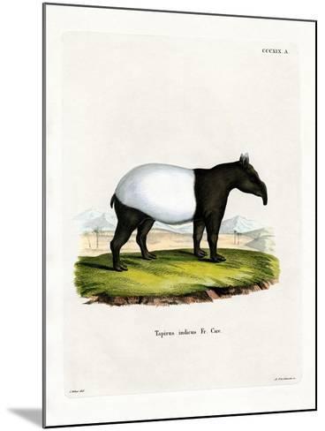 Indian Tapir--Mounted Giclee Print