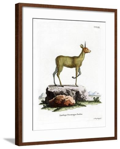 Klipspringer--Framed Art Print