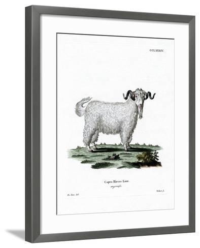 Angora Goat--Framed Art Print