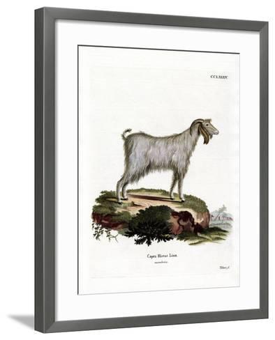 Mamber Goat--Framed Art Print
