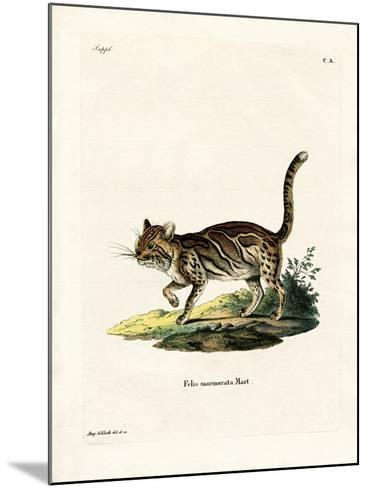 Marbled Cat--Mounted Giclee Print