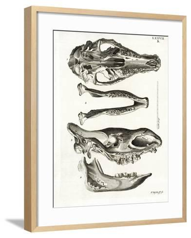 Jaw Bones--Framed Art Print