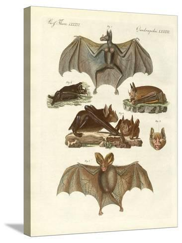 Rare Bats--Stretched Canvas Print