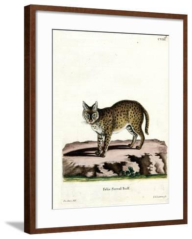 Serval--Framed Art Print