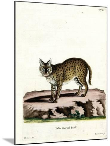 Serval--Mounted Giclee Print