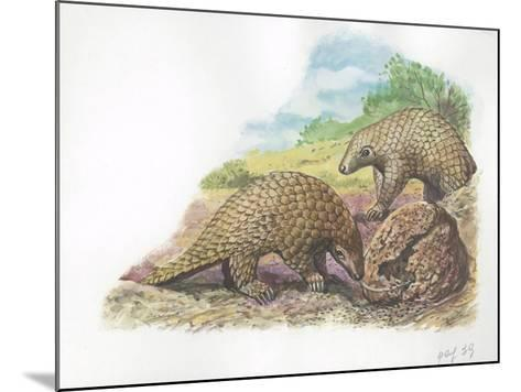 Tree Pangolins Manis Tricuspis Catching Ants--Mounted Giclee Print