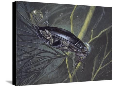 Whirligig Beetle in Water (Gyrinus Natator)--Stretched Canvas Print