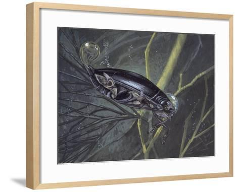 Whirligig Beetle in Water (Gyrinus Natator)--Framed Art Print
