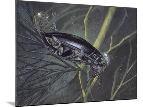 Whirligig Beetle in Water (Gyrinus Natator)--Mounted Giclee Print
