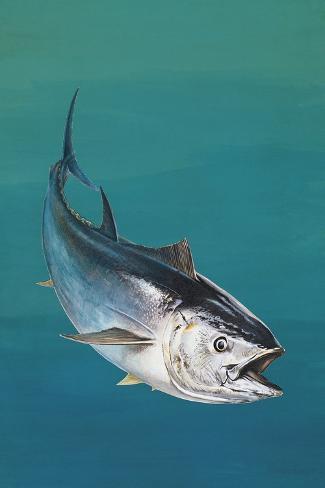 Close-Up of an Atlantic Bluefin Tuna (Thunnus Thynnus)--Stretched Canvas Print