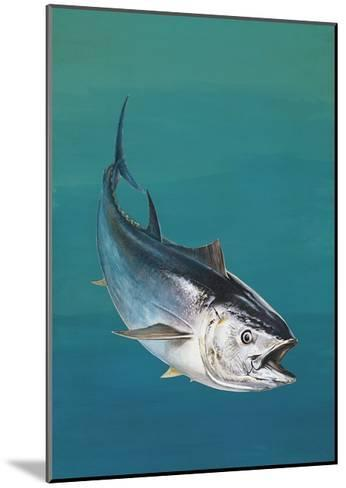 Close-Up of an Atlantic Bluefin Tuna (Thunnus Thynnus)--Mounted Giclee Print