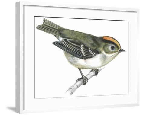 Birds: Passeriformes, Goldcrest (Regulus Regulus)--Framed Art Print