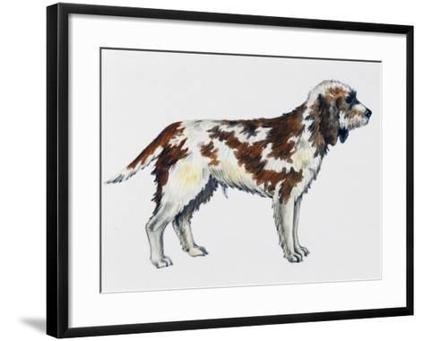 Briquet Griffon Vendeen (Canis Lupus), Canidae--Framed Art Print
