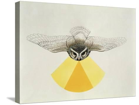 Close-Up of an Owl with its Field of Vision--Stretched Canvas Print