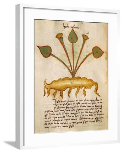 Herba Nasturzio by Orgione Rizzardo, 14th Century--Framed Art Print